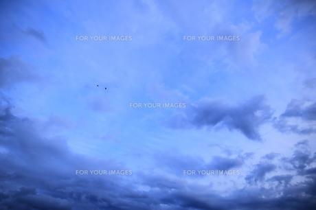 大空を飛ぶ鳥の写真素材 [FYI00261944]