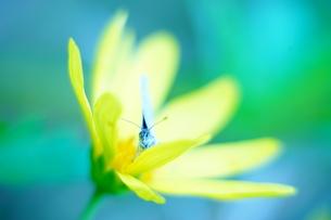 花と蝶の写真素材 [FYI00261967]