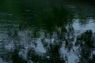 雨の波紋の写真素材 [FYI00261976]