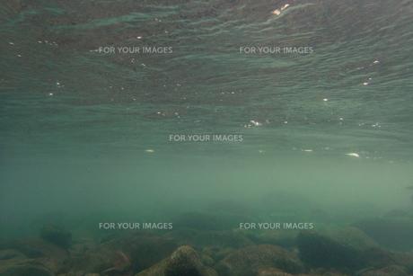 鮎のいる川の写真素材 [FYI00261997]
