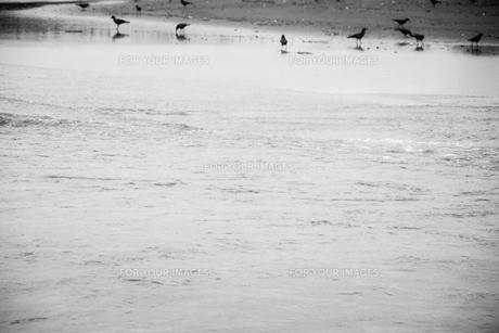 浜辺の鳥の素材 [FYI00262000]