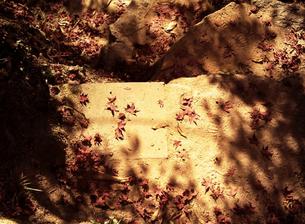 落ち葉の道の素材 [FYI00262748]