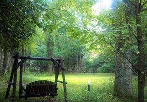 幻想の森の写真素材 [FYI00262751]