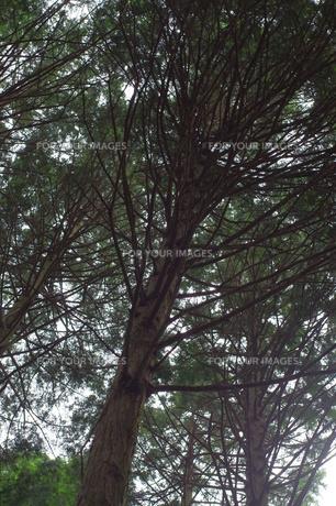 森へいこうの写真素材 [FYI00262920]
