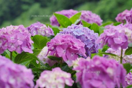 山のお花屋さんの写真素材 [FYI00262950]