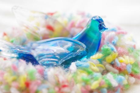 青い鳥の写真素材 [FYI00262963]