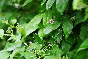 小花ちらしの写真素材 [FYI00262978]