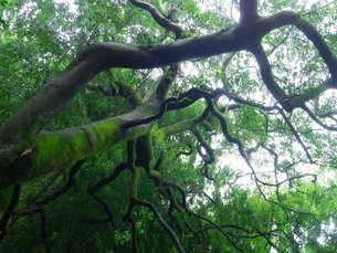 森林浴の写真素材 [FYI00262980]