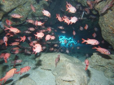 海中トンネルの写真素材 [FYI00263053]