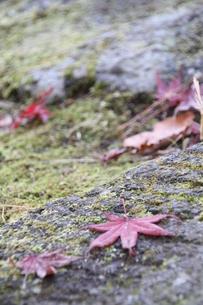 秋の茶室 庭の素材 [FYI00263103]