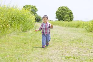菜の花畑を駆けてくる子供の写真素材 [FYI00263252]