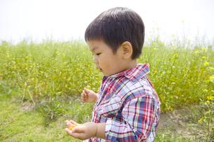 花摘みをする子供の横顔の写真素材 [FYI00263257]