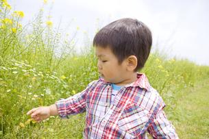 花を摘む子供の写真素材 [FYI00263259]