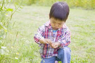 花を摘んでいる子供の写真素材 [FYI00263269]