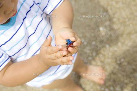 ヤドカリのオモチャを持つ子供の写真素材 [FYI00263305]
