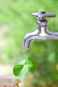 クローバーの葉と水道の水滴の写真素材 [FYI00263318]