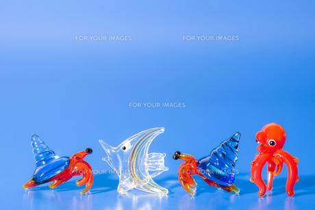 ガラス細工の海の生き物の写真素材 [FYI00263336]