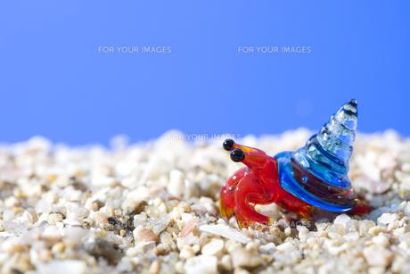 砂浜のヤドカリの写真素材 [FYI00263343]