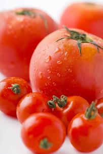 沢山のトマトの写真素材 [FYI00263550]