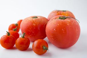 沢山のトマトの写真素材 [FYI00263560]