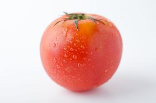 トマト1個の写真素材 [FYI00263565]