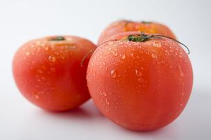 トマトの写真素材 [FYI00263566]