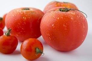 トマトの写真素材 [FYI00263567]