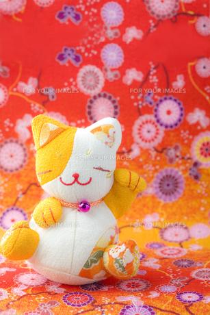 華やかな招き猫の写真素材 [FYI00263573]
