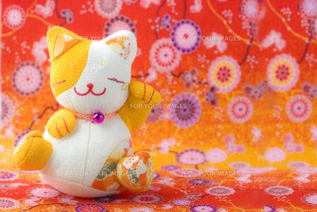 華やかな招き猫の写真素材 [FYI00263574]