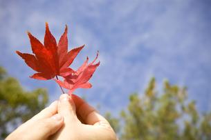 手に持ったミミ時の葉の素材 [FYI00263597]