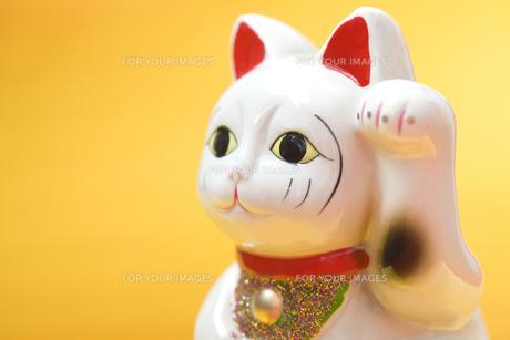 招き猫の写真素材 [FYI00263748]
