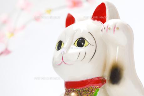 新春の招き猫の写真素材 [FYI00263760]