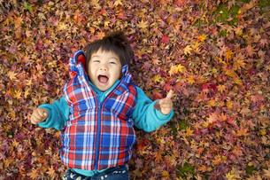 一面のモミジと笑顔の子供の写真素材 [FYI00263825]