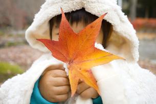 葉で顔を隠す子供の写真素材 [FYI00263845]