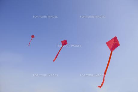 凧揚げの写真素材 [FYI00263991]