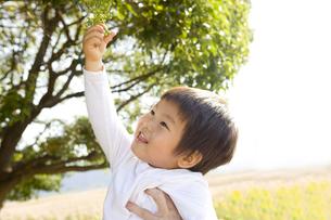木の実を取る子供の素材 [FYI00263995]