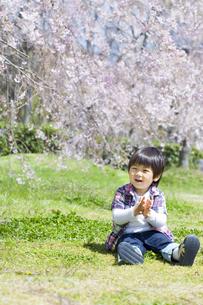 桜と座る子供の写真素材 [FYI00264305]