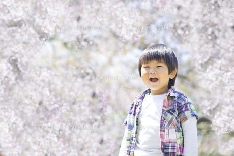 満開の桜と子供の素材 [FYI00264311]