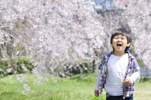 満開の桜と笑顔の子供の写真素材 [FYI00264318]