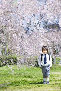 桜と新学期の子供の写真素材 [FYI00264324]