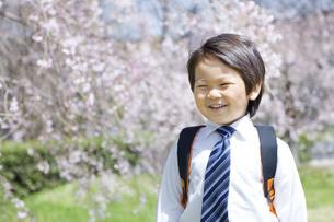 桜と新学期の子供の写真素材 [FYI00264336]