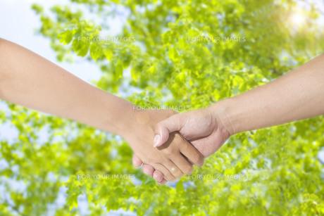 握手する手の写真素材 [FYI00264350]