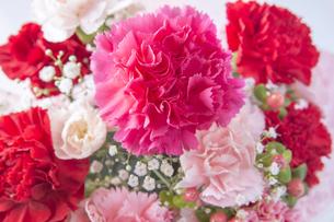 カーネーションの花束の写真素材 [FYI00264998]