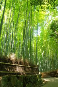 嵯峨野の竹林の写真素材 [FYI00265270]