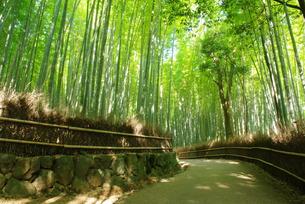 嵯峨野の竹林の写真素材 [FYI00265278]