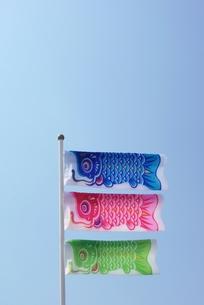 鯉のぼりの写真素材 [FYI00265282]