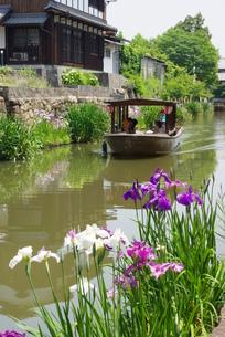 近江八幡の水郷の写真素材 [FYI00265317]