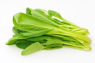 チンゲン菜の写真素材 [FYI00265329]