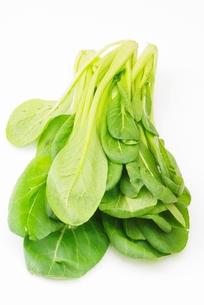 チンゲン菜の写真素材 [FYI00265344]