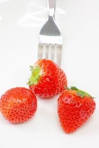 イチゴを食すの写真素材 [FYI00265355]